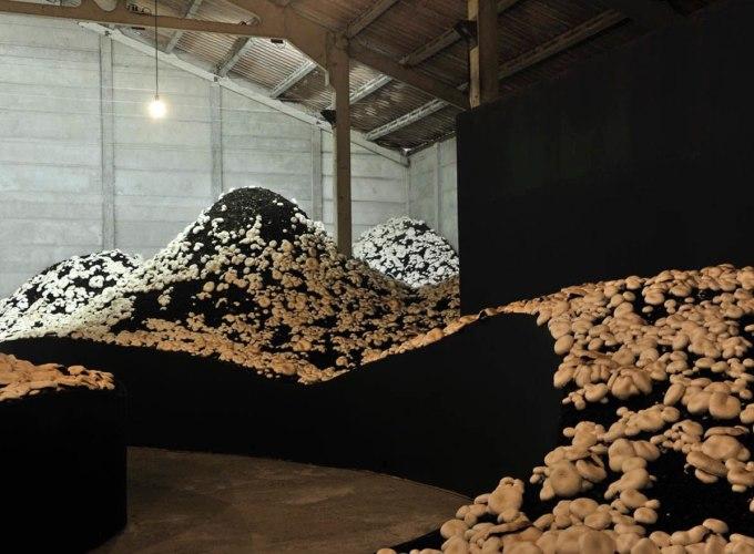 Kunstenfesfival Watou 2019, Zeger Reyers,