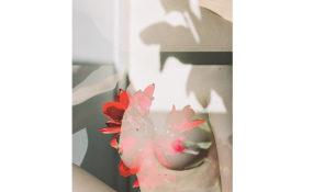 Annelie Bruijn, ElliottHalls Gallery