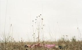 Kanako Sasaki, Contour Gallery