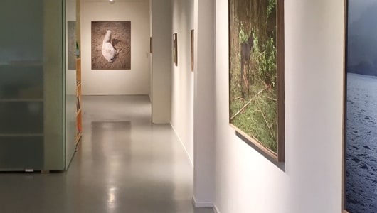Stay, Charlotte Dumas, andriesse eyck galerie
