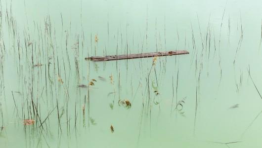 Japanse Oesters, Natascha Libbert, Galerie Vriend van Bavink