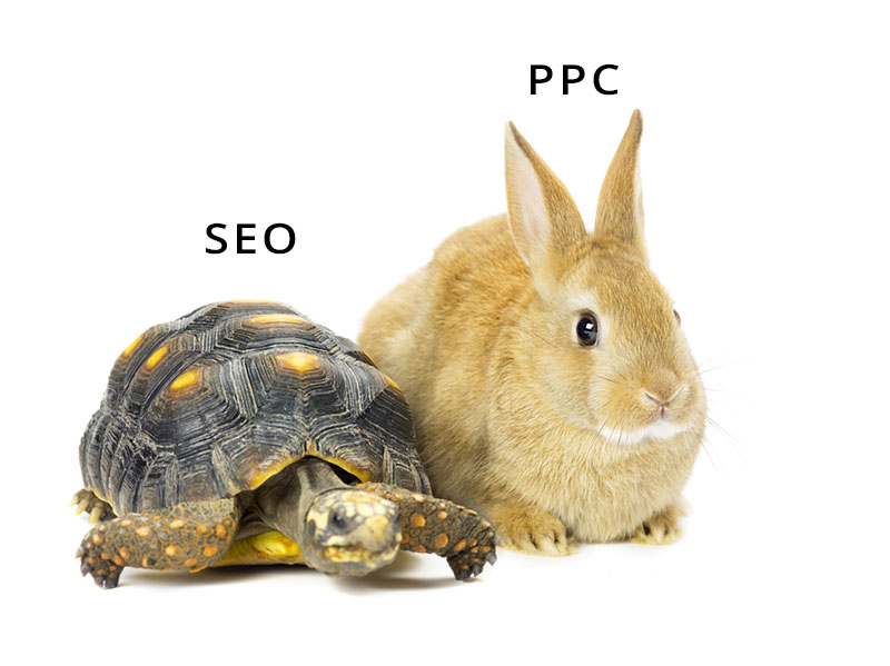 a tortoise and a hare