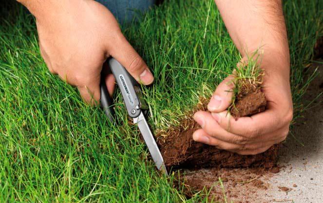 Самозахват земли: кто несет ответственность в 2021 году