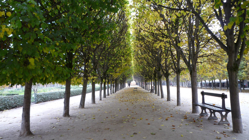Un caf kitsun dans les jardins du palais royal for Jardin royal ponthierry