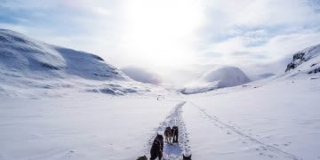 Sled dogs walking in the snow between mountains, cold, trail, mountain, dogs, sled
