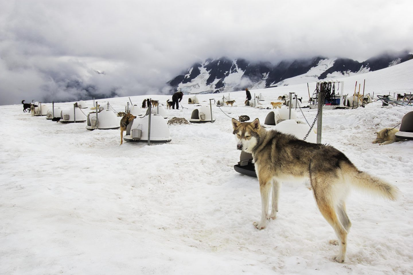 Sled dogs at dog camp in the snow between mountains in Alaska, USA, Chugach Mountains, dog sled