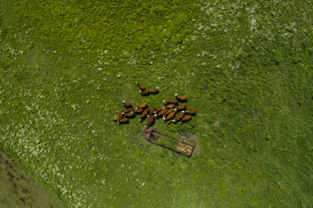 aerial view of cows in a green field. Finding your why, GamePlanA