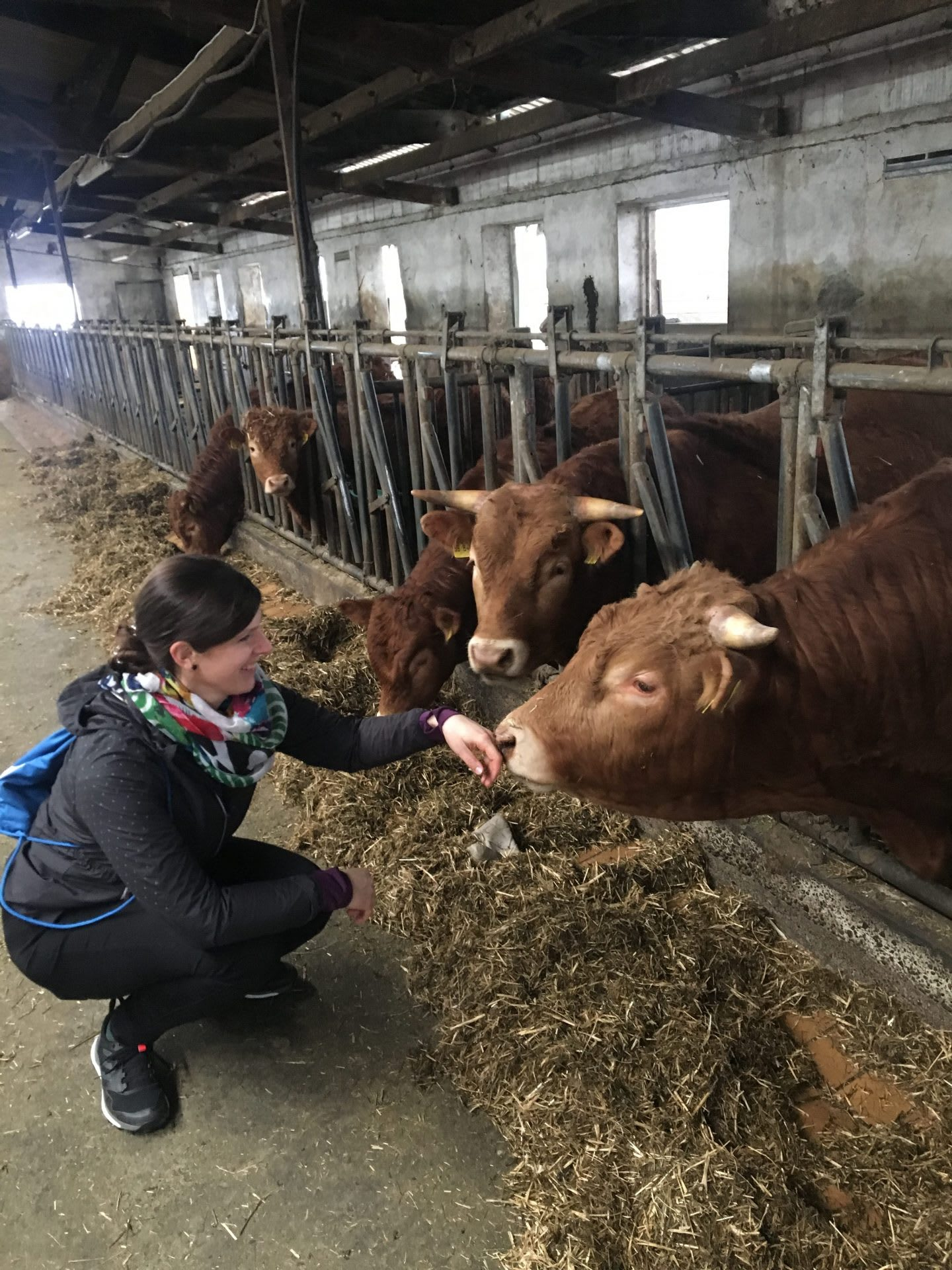 Stefanie feeding cow green sustainability purpose. Finding your why, GamaPlanA