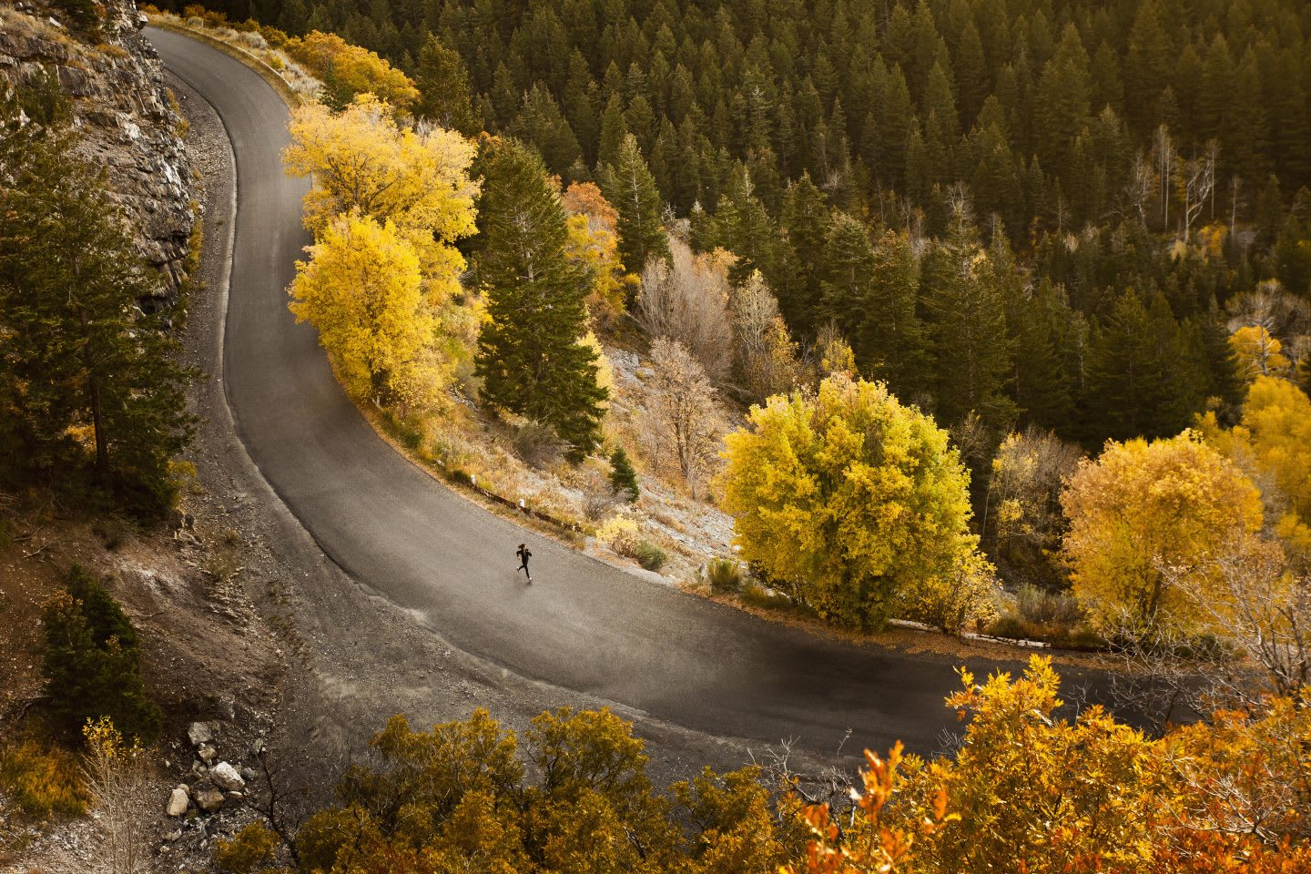 Solo runner running down winding round in between trees with autumn leaves, fall, scenic, mountain, road