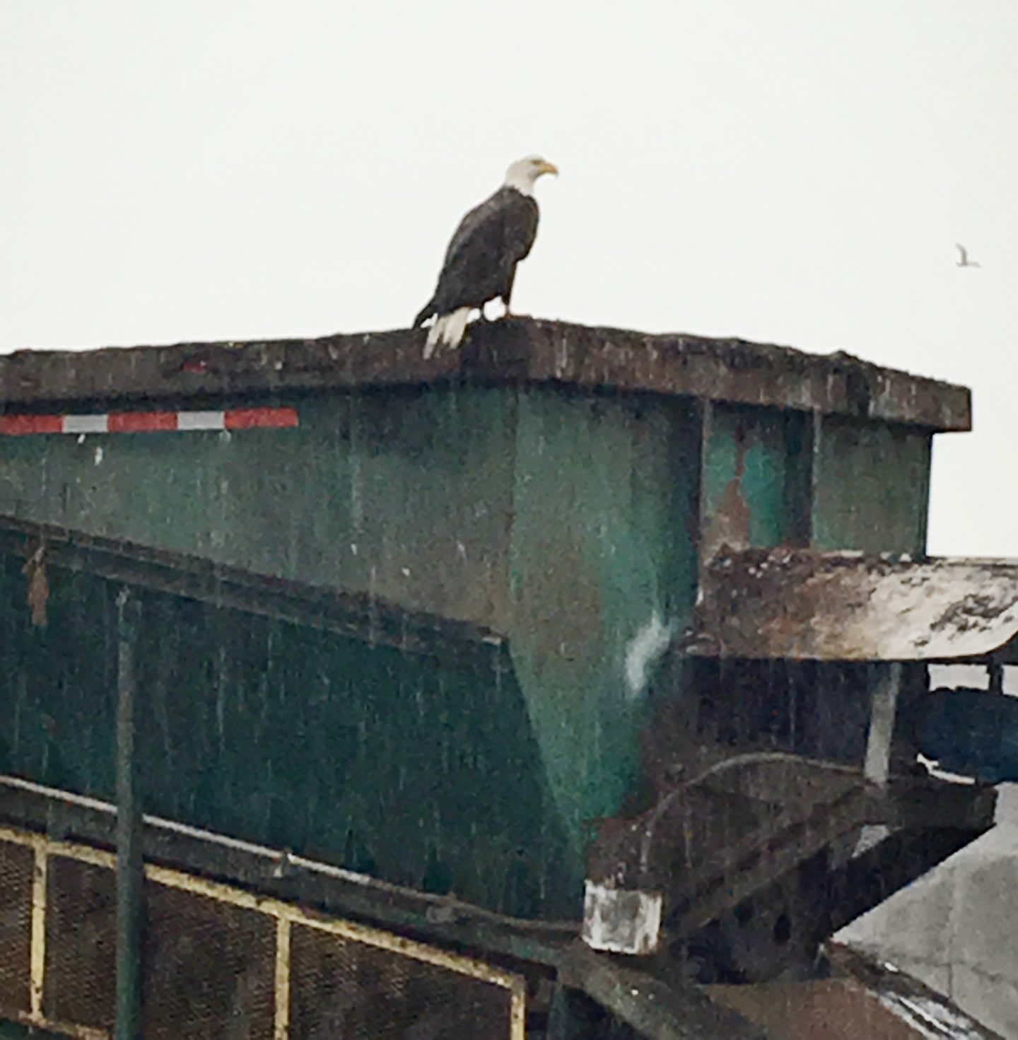 Eagle perching on a compost truck at farm, animals, wildlife, Reebok, Mike Andrews