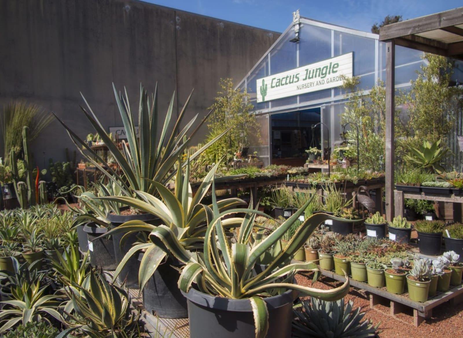 Gifts at Cactus Jungle