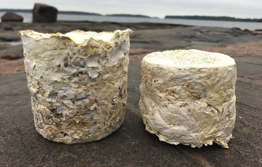 Mycelium insulation blocks are made by letting the fungus feed on a substrate such as sawdust and grow into a shaped mould (Biohm)