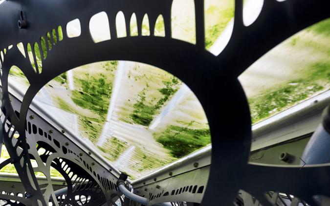 Image: www.photosynthetica.co.uk