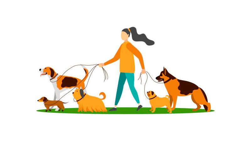 Pessoa passeando com cachorros de diversas raças