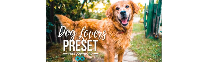 Cão golden retriever olhando para a câmera em um gramado