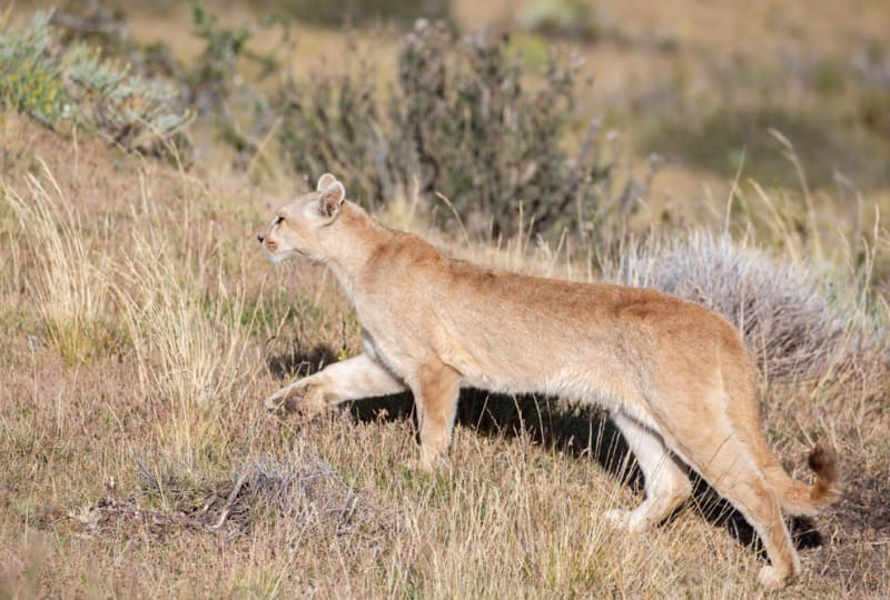 Puma Climbing