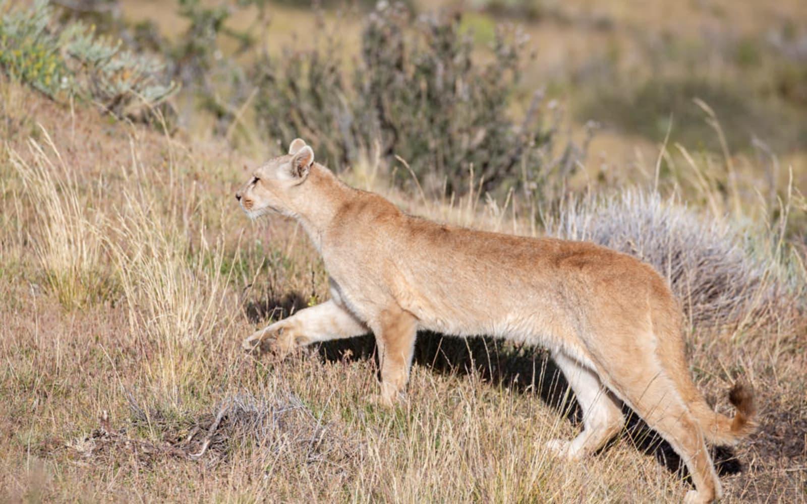 >Puma Climbing