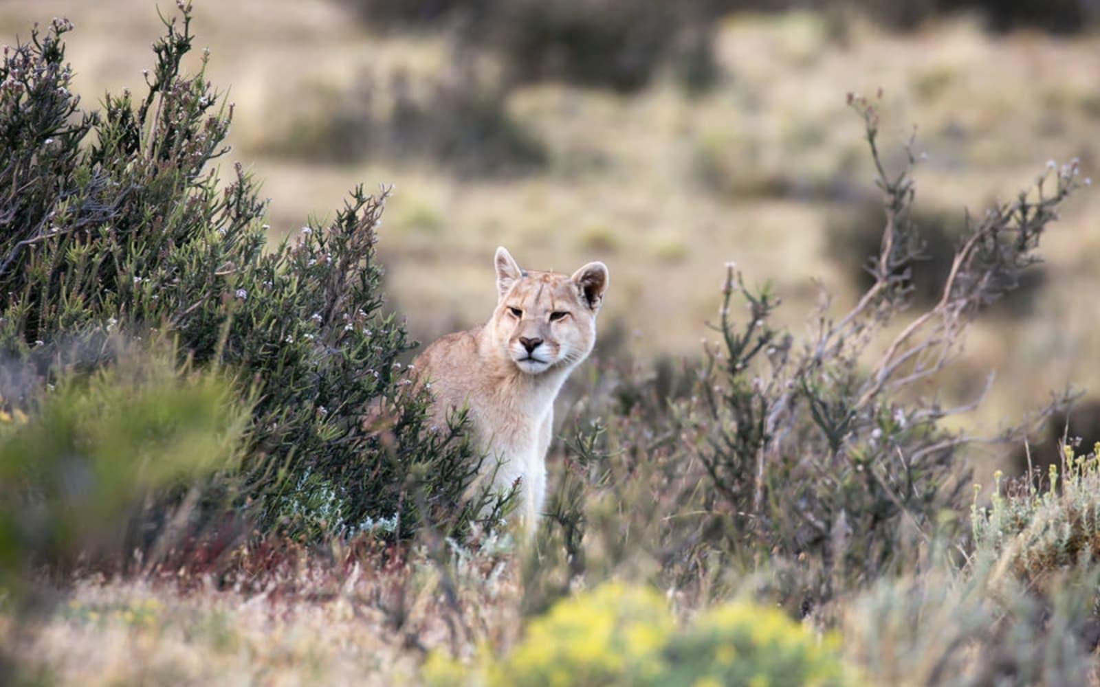 >Puma Peeks