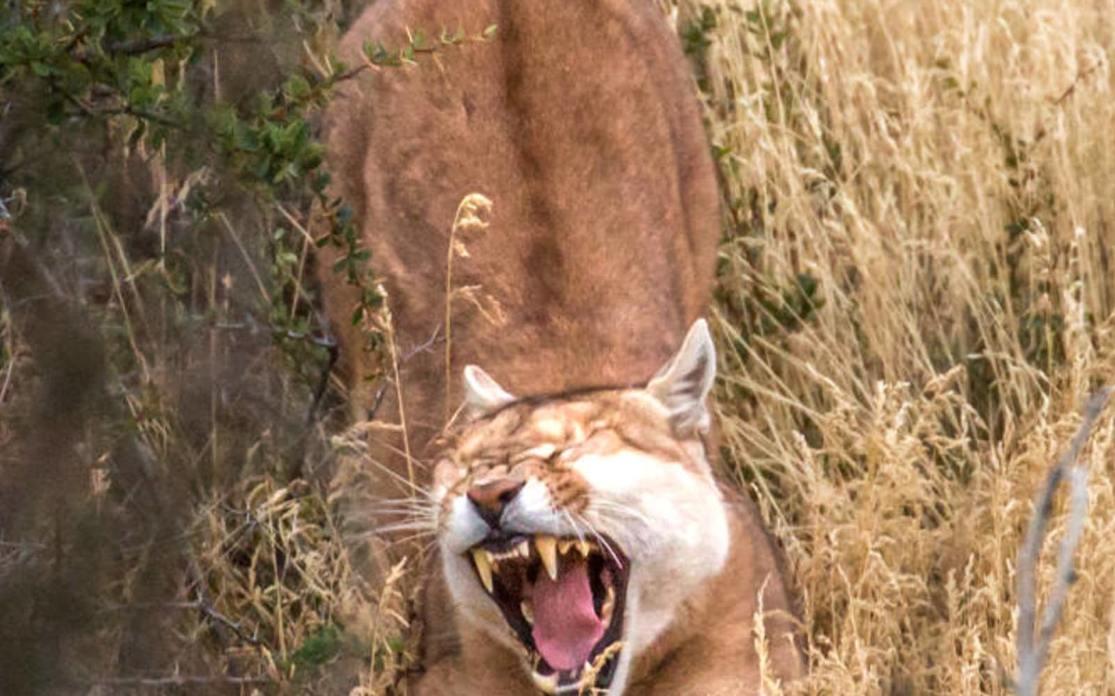 >Puma Stretching