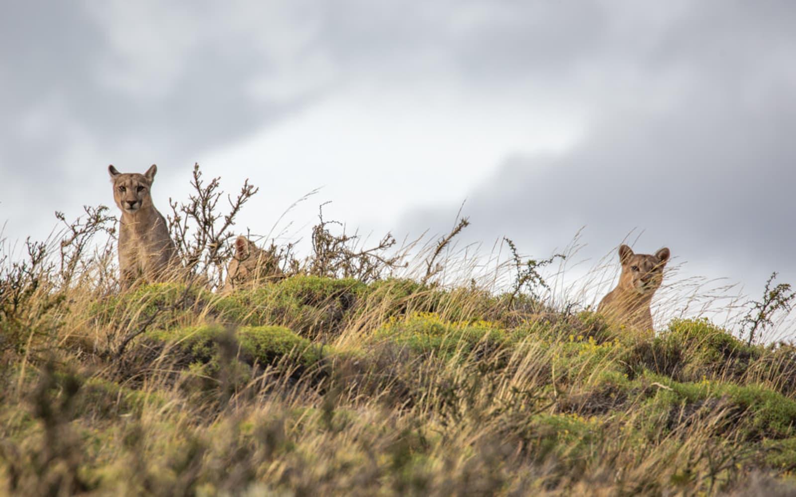 >Pumas on the Horizon