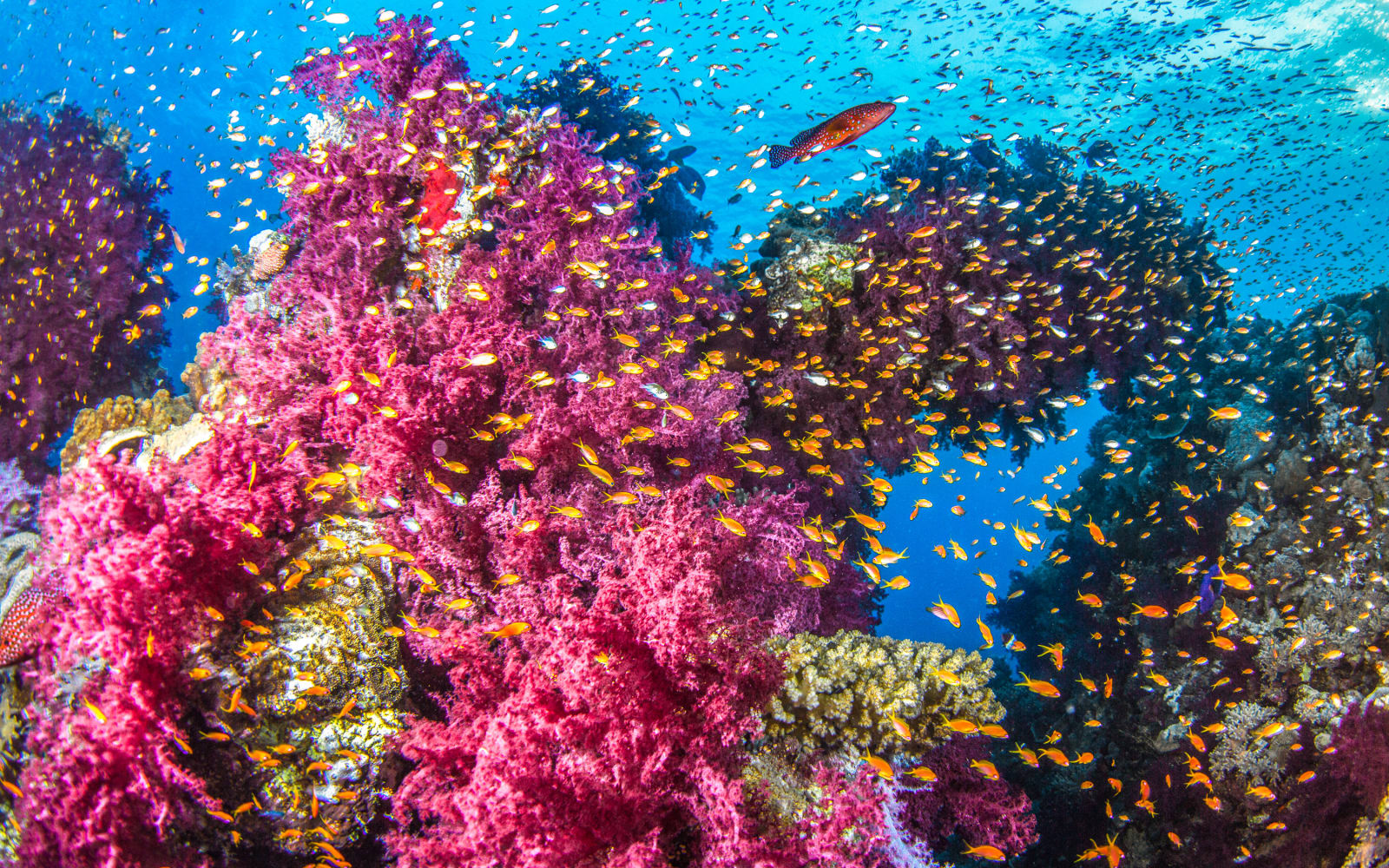 >Red Sea Reef