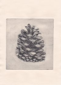 Pine cone drypoint print