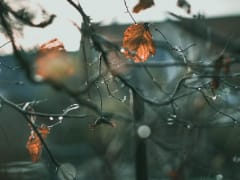 В понедельник в Рязанской области похолодает до +10