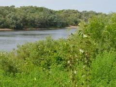 Установлена личность мужчины, утонувшего в реке в Пронском районе