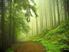В рязанском Приокском два два участка превратят в зону городских лесов