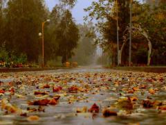 Глубокая осень придёт в Рязанскую область на следующей неделе