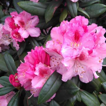 Dorit Flor