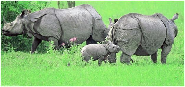 Ten Best National Parks Of India You Should Visit 2