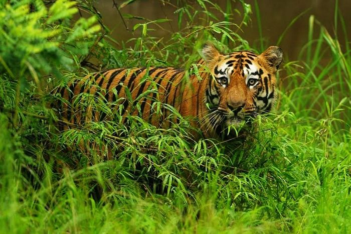 Tadoba-best-places-in-Maharashtra