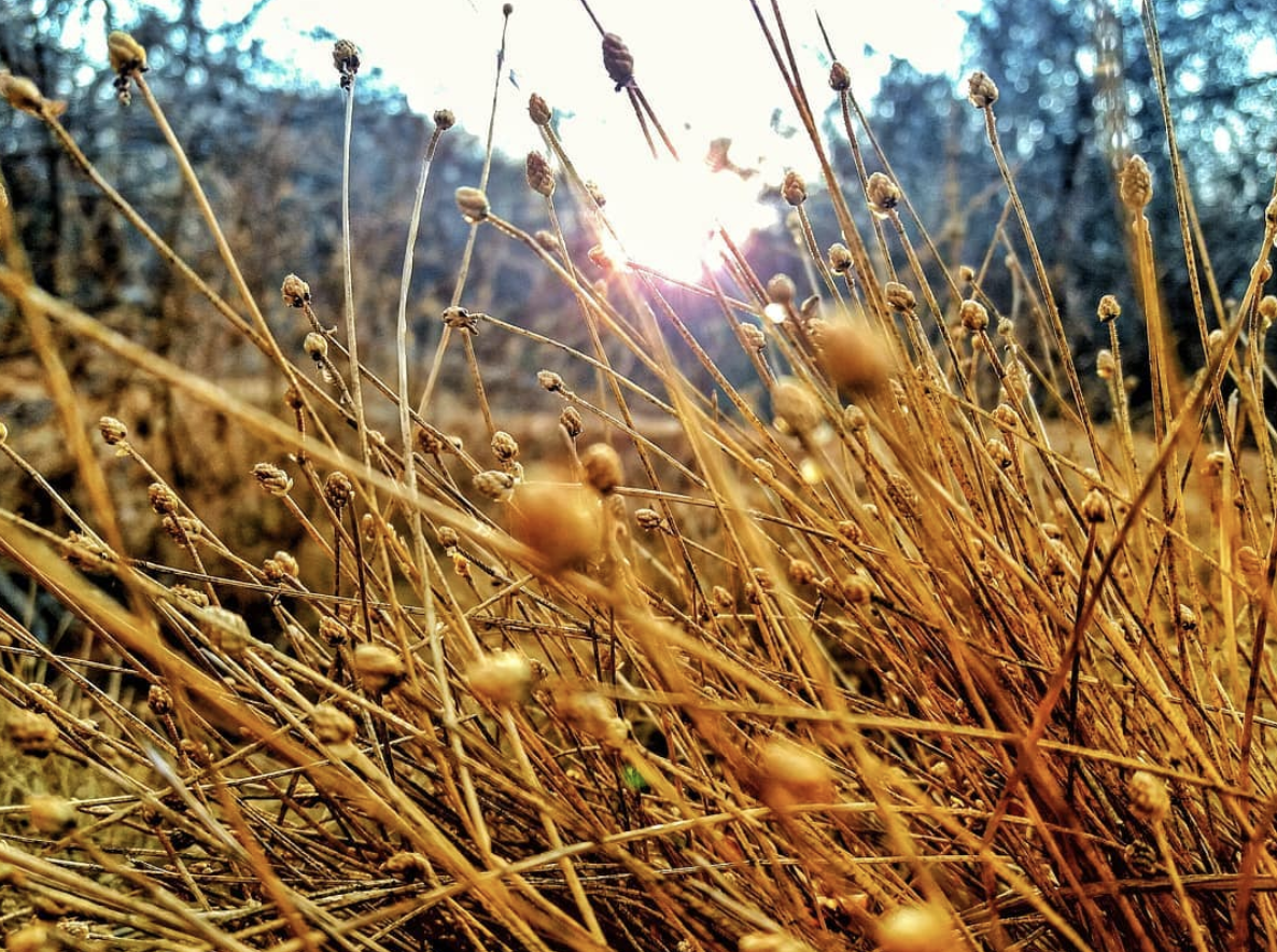 Capim Dourado: What is the Golden Grass and who on Instagram wears it?