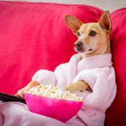 How to enjoy worry free holidays with your pet at home: Dog sitting on sofa watching TV