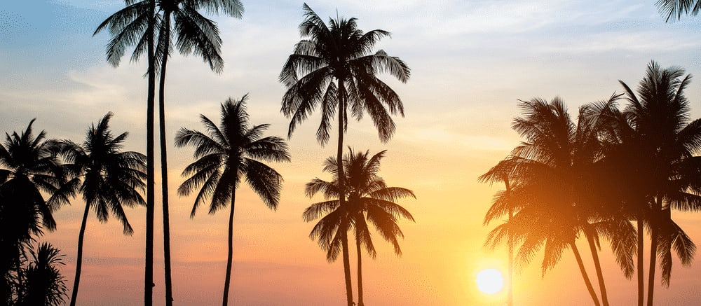 Travelling with a mental health condition: palm rees under the sun