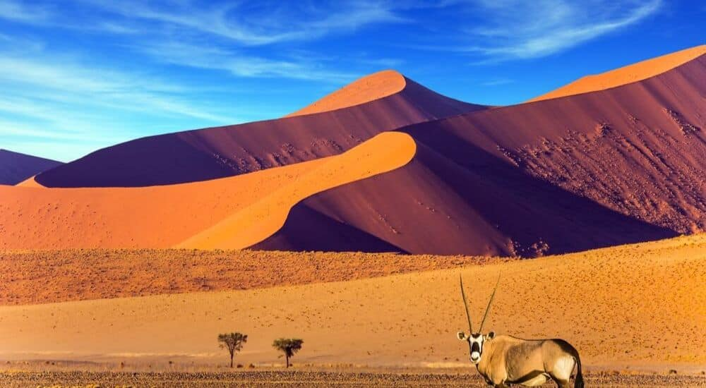 Top-5-Travel-Experiences-for-October-2019-Namibia-AllClear-Travel-Blog