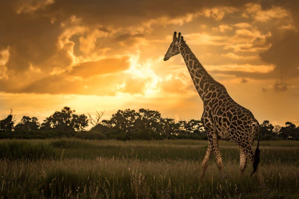 The best Autumn holiday destinations: Botswana