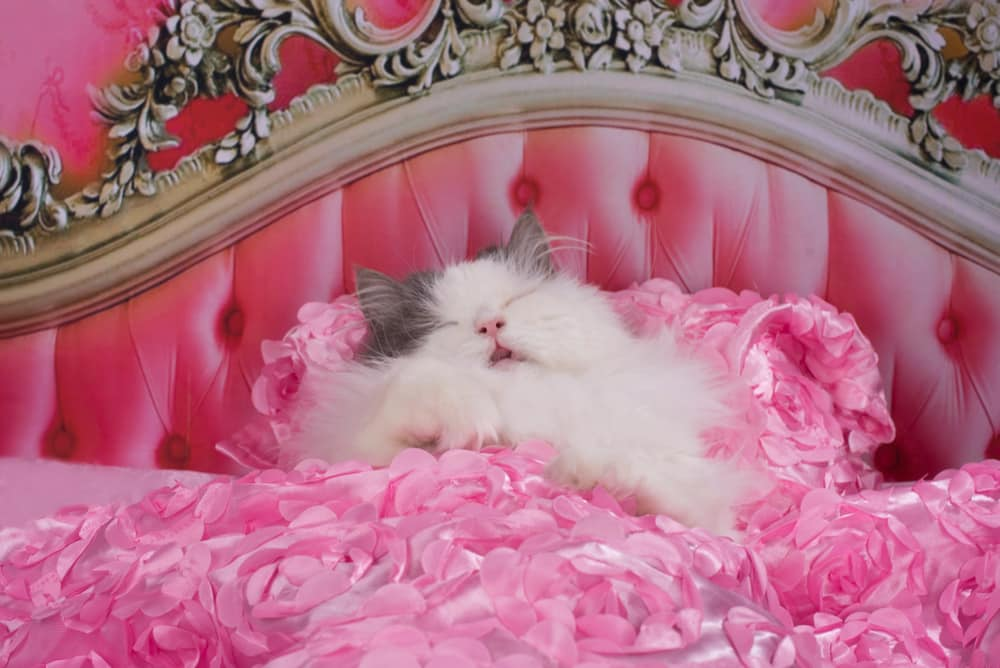 Travel the UK with your pets: Cat sleeping in fancy bed