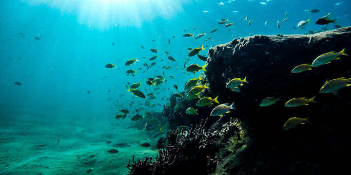 Palau-Bans-Reef-Toxic-Sunscreens-The-reef-AllClear-Travel