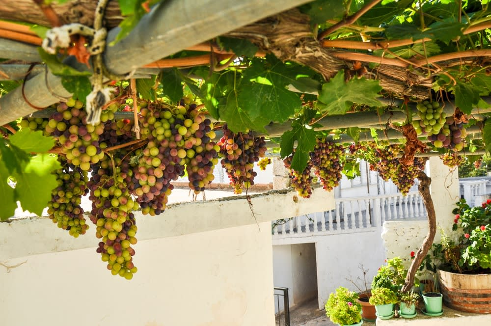 A Holiday for ME: Grapes bar, Greece