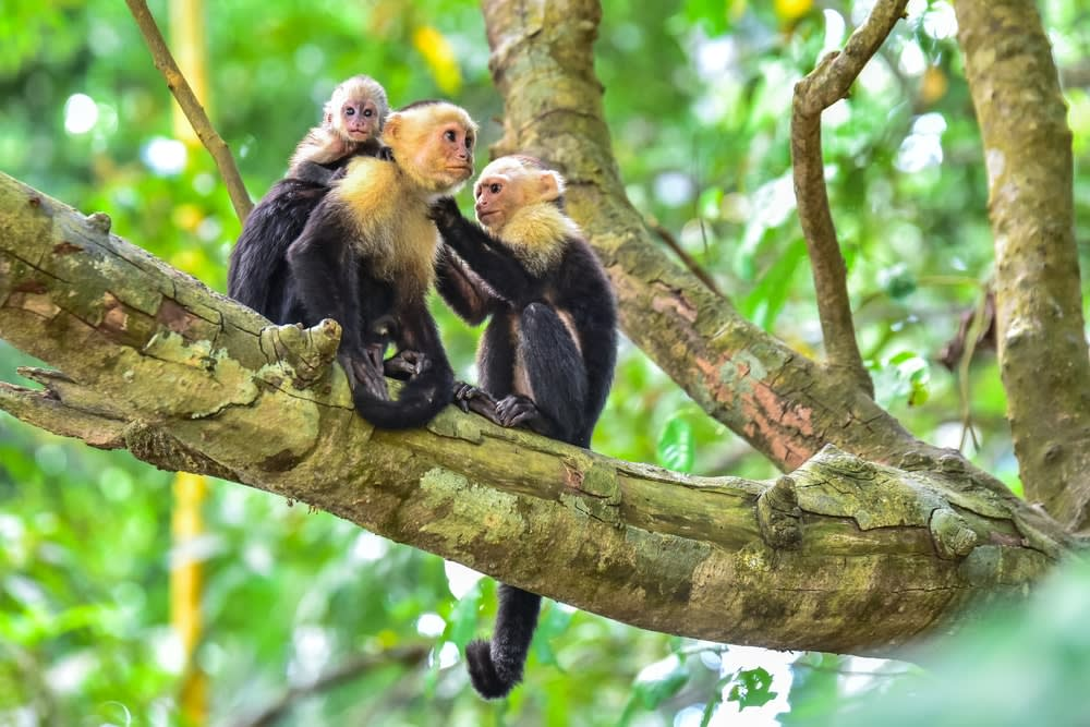 The 5 best ecotourism holidays for mature travellers: Costa Rica National Park