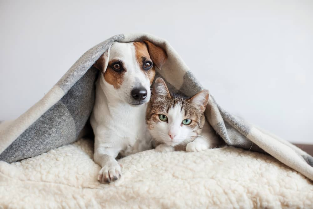How to enjoy worry free holidays with your pet at home: Dog and kitten sleeping under bed covers