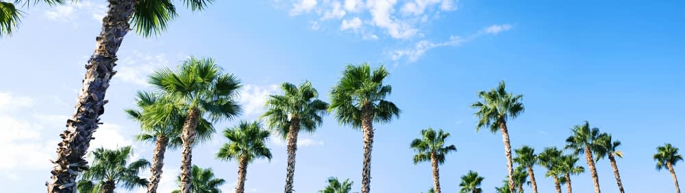 New study discovers how holidays help you live longer : palm trees panoramic
