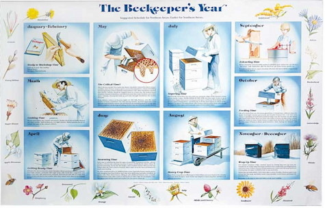 The Beekeeper\'s Year