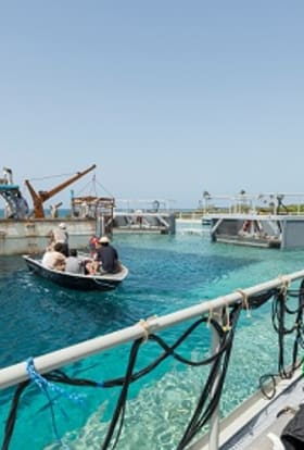 Shark movie filmed in Dominican Republic water tank