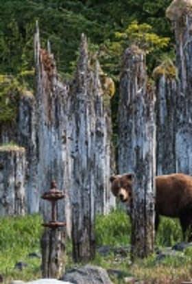 BBC films live Alaskan wildlife documentary