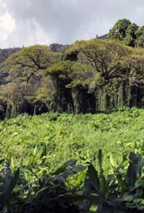 Triple Frontier: Hawaii filmed as South America