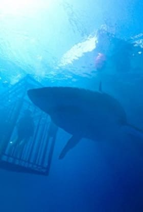 47 Meters Down sequel to film in UK water tanks