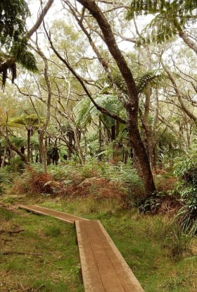 Spotlight on... Reunion Island